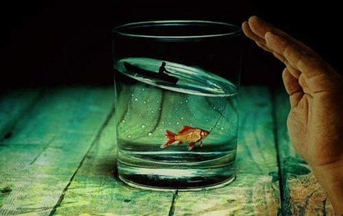 水の中の魚と水の星座