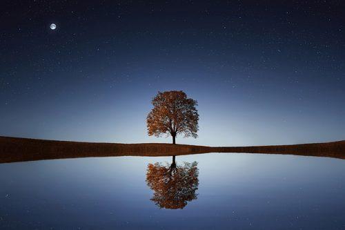 ホロスコープは一本の木